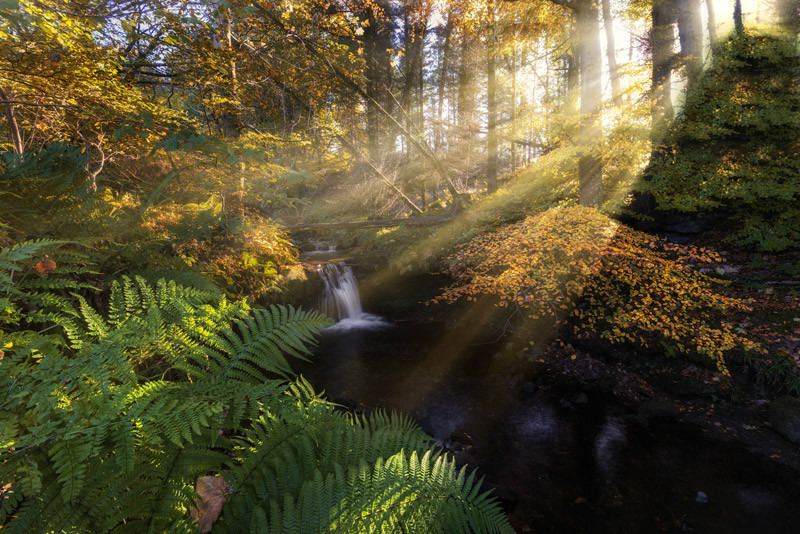 Autumnal rays - Ayrshire Gallery