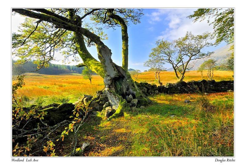 loch awe,woodland - The Light Captured