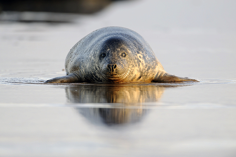 - Gray seal portfolio