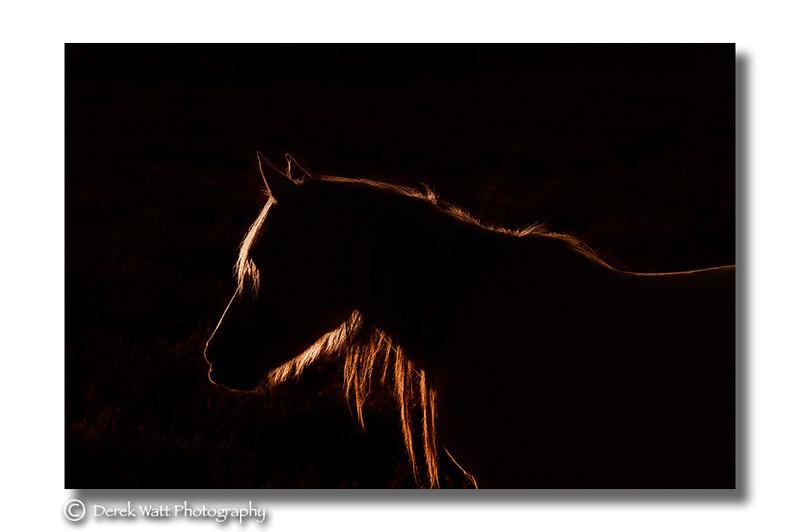 - New Forest ponies portfolio
