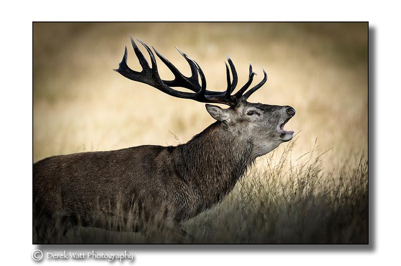 - Red Deer portfolio