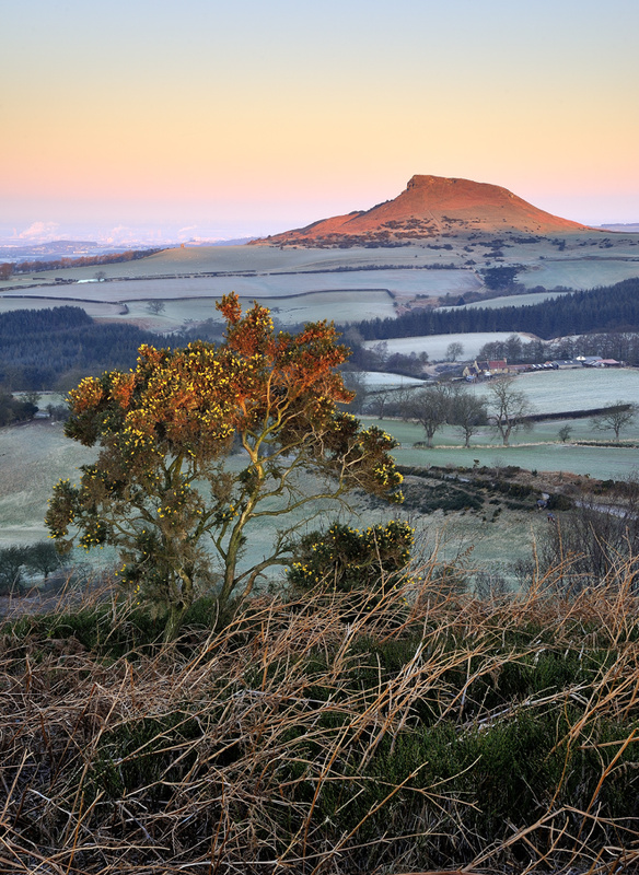 Thorn's of winter - Roseberry Topping