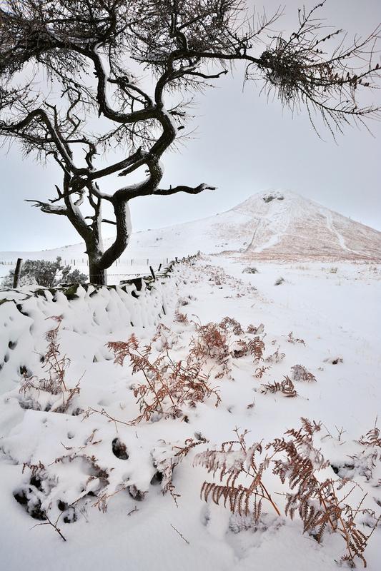 Winter Tree - Roseberry Topping - Roseberry Topping