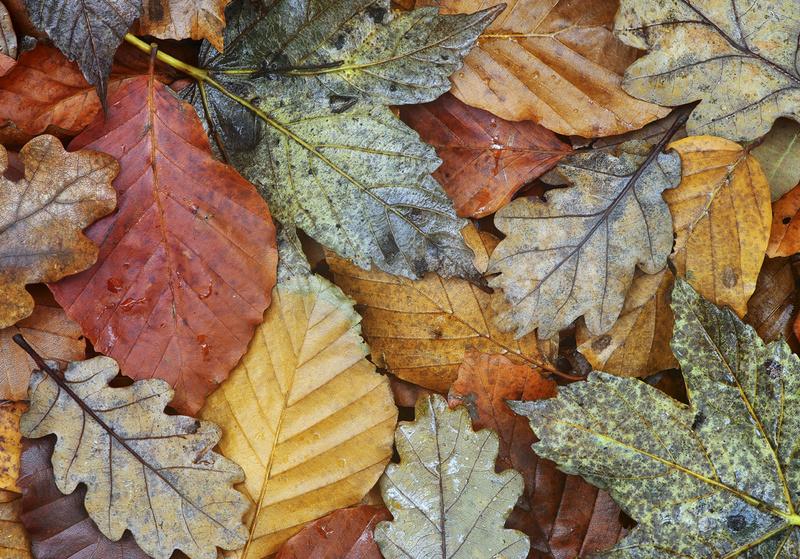 Autumn carpet - Miscellaneous