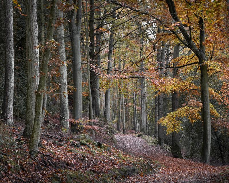 Woodland beauty - Whitby & surrounding areas