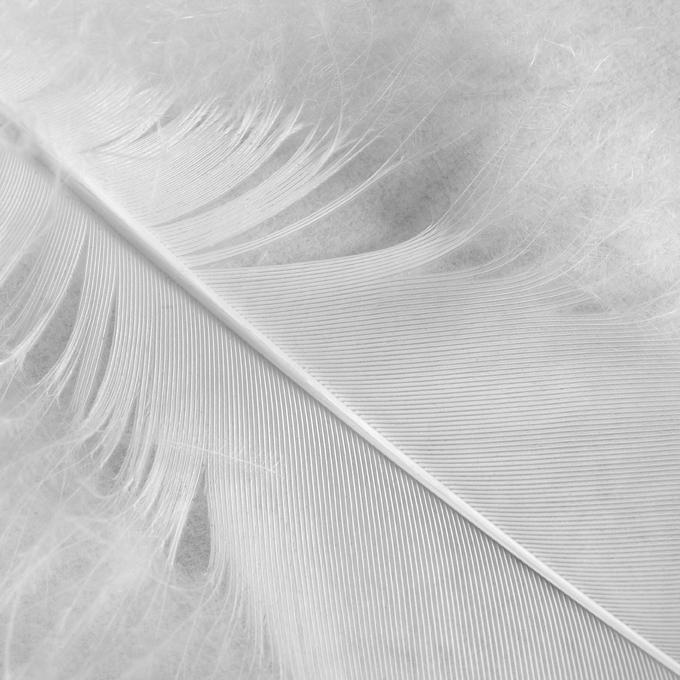 White flight - Square Format