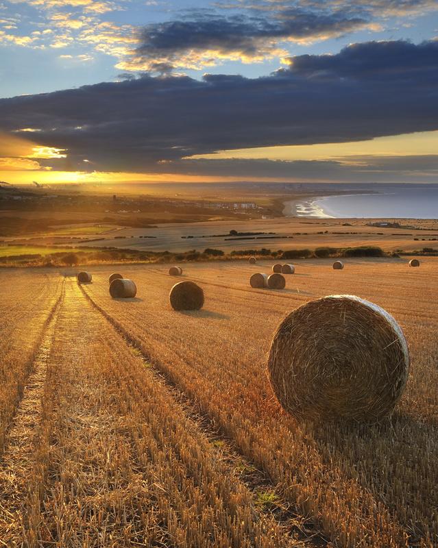 Golden Harvest - Saltburn by the sea - Recent Photographs