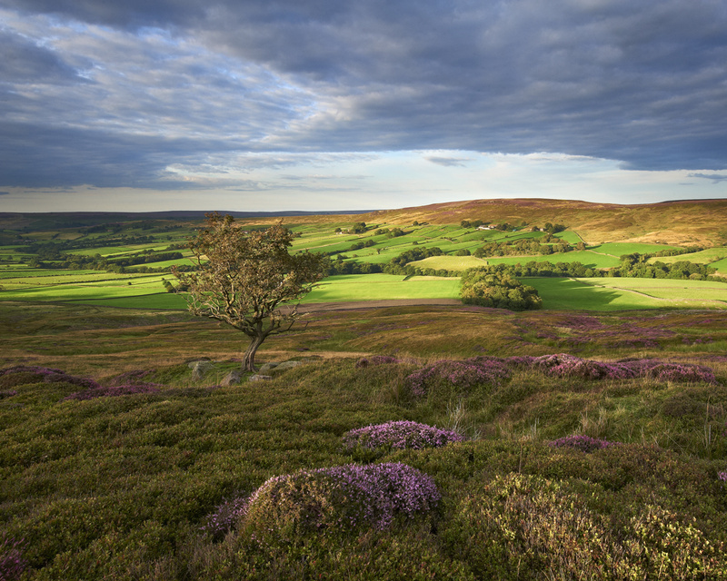moorland beauty. - Whitby & surrounding areas