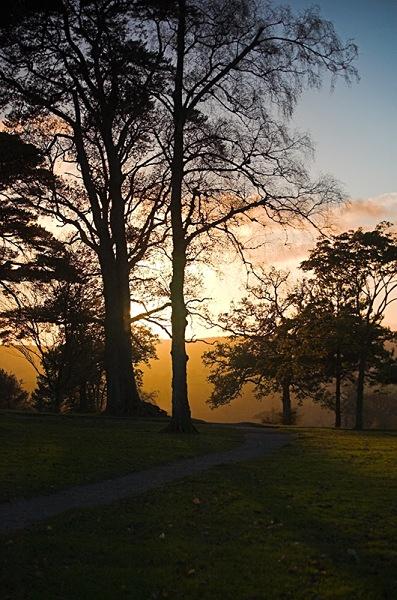 Trees - Landscape & Nature