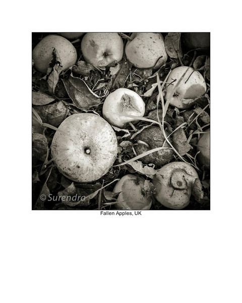 - Organic Forms