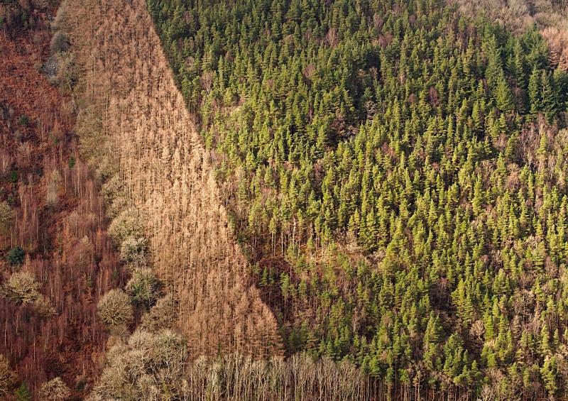 Industrial forestry, Dolgellau - Rural