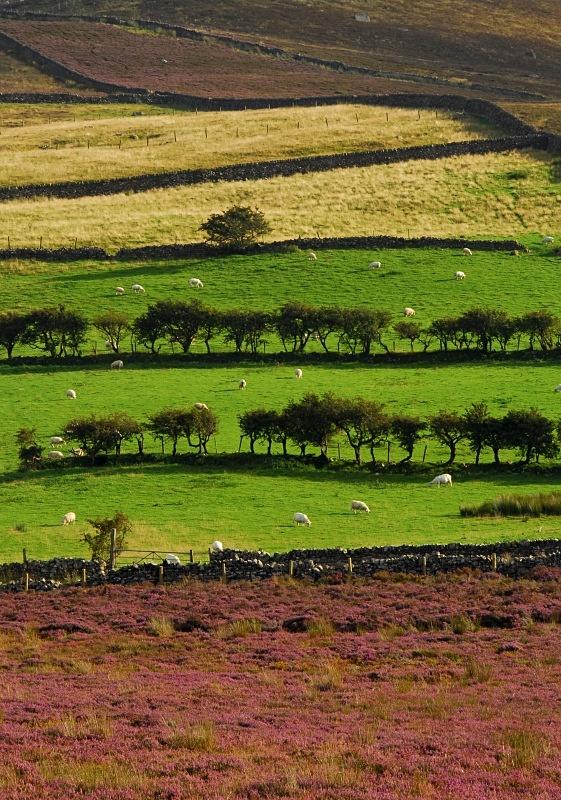 Bwlch y Mawn - Rural