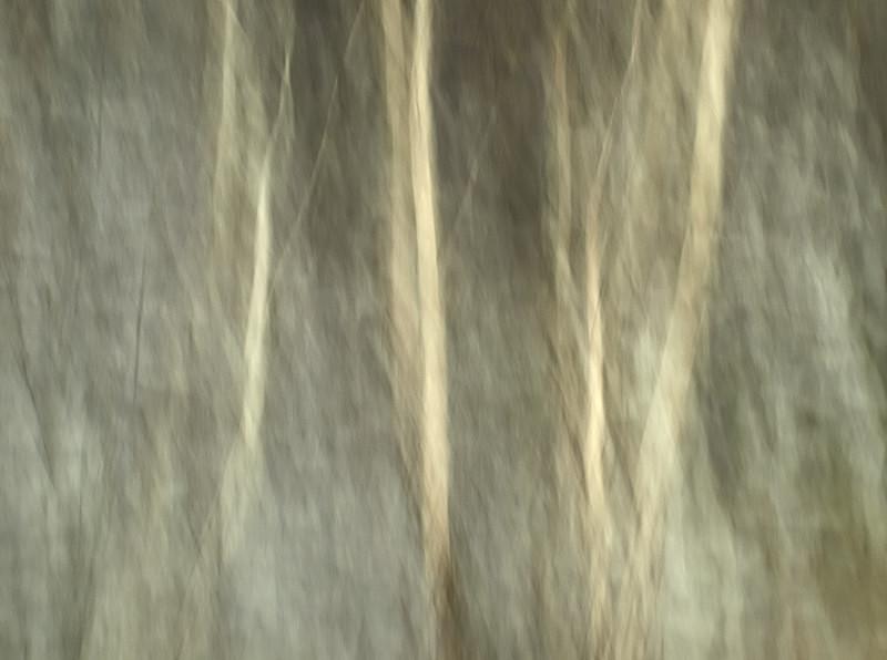 birches, slate, Dyffryn Ogwen - Abstractions