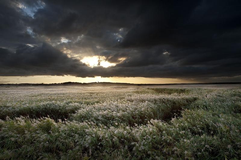 L 01 - Landscape