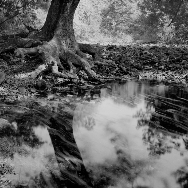 The Sitting Tree - Remnantal Oases: India's Wild Places