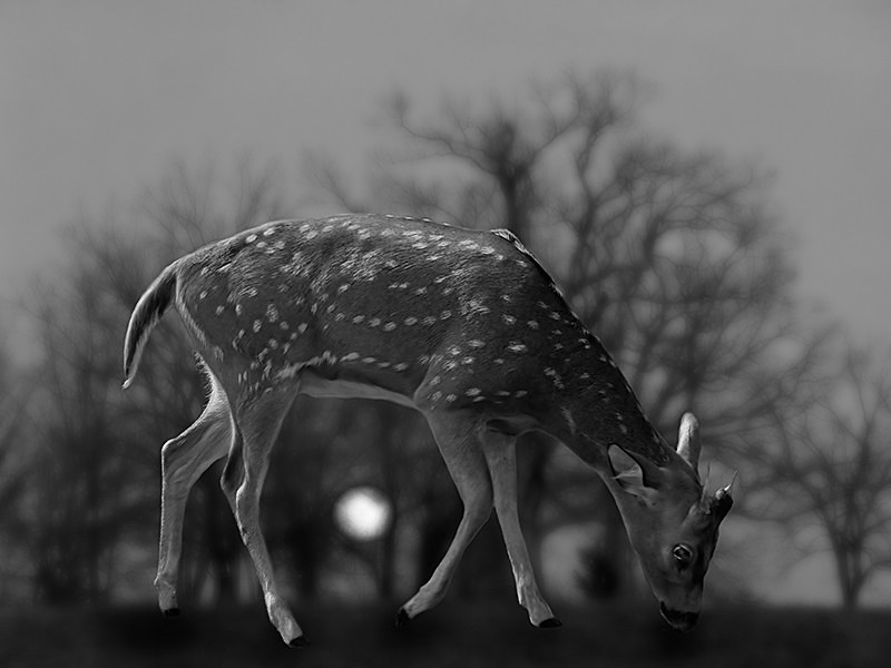 A Lone Fawn - MEMORIES OF HOME