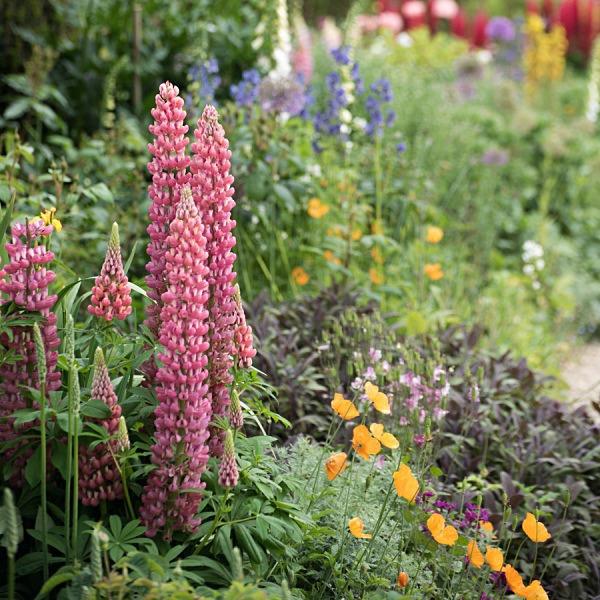- Hidcote Gardens
