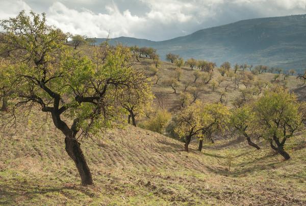 - Las Alpujarras, Andalucia