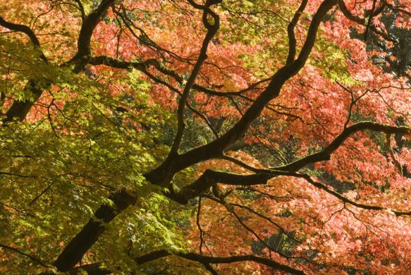 - Westonbirt Arboretum