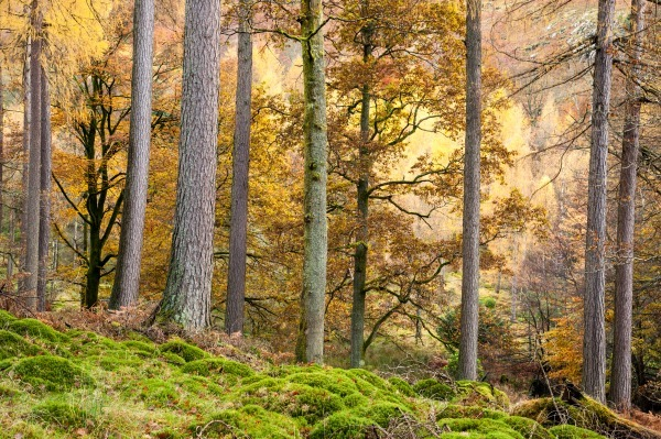 Manesty Woods - The Lake District