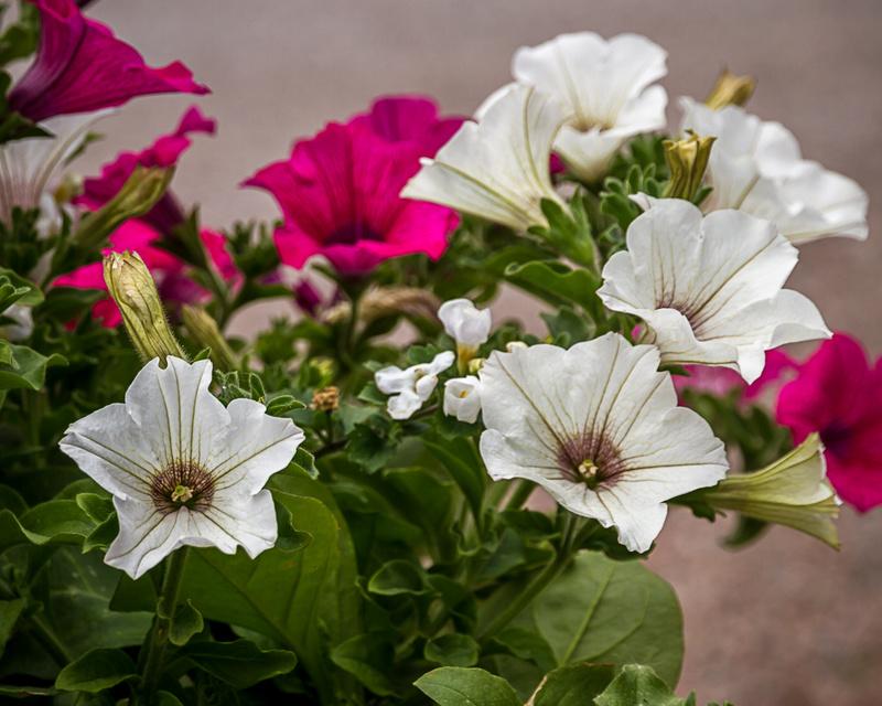 Flowers - Miscellaneous