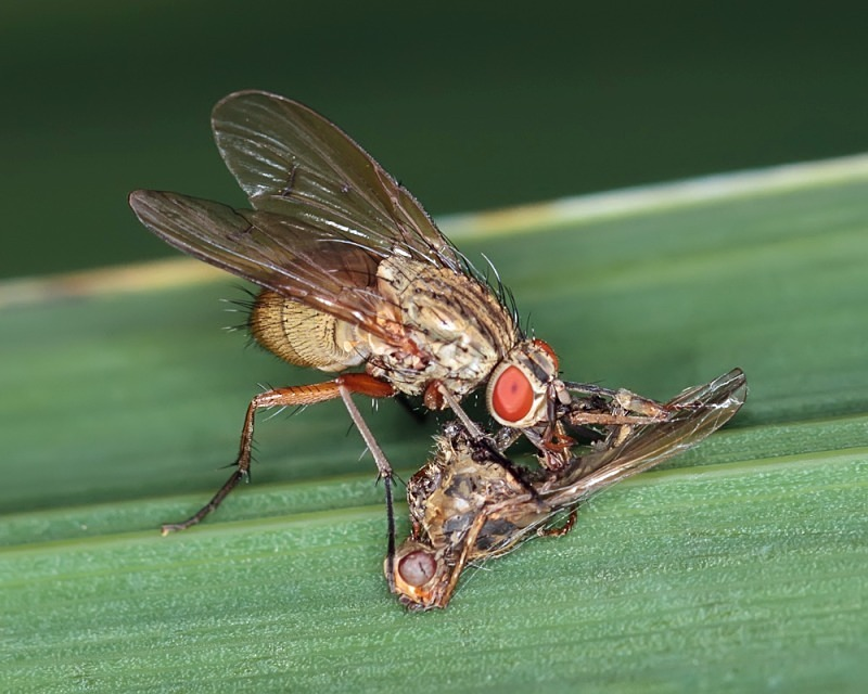 Lunch on the Fly - Macro Photography