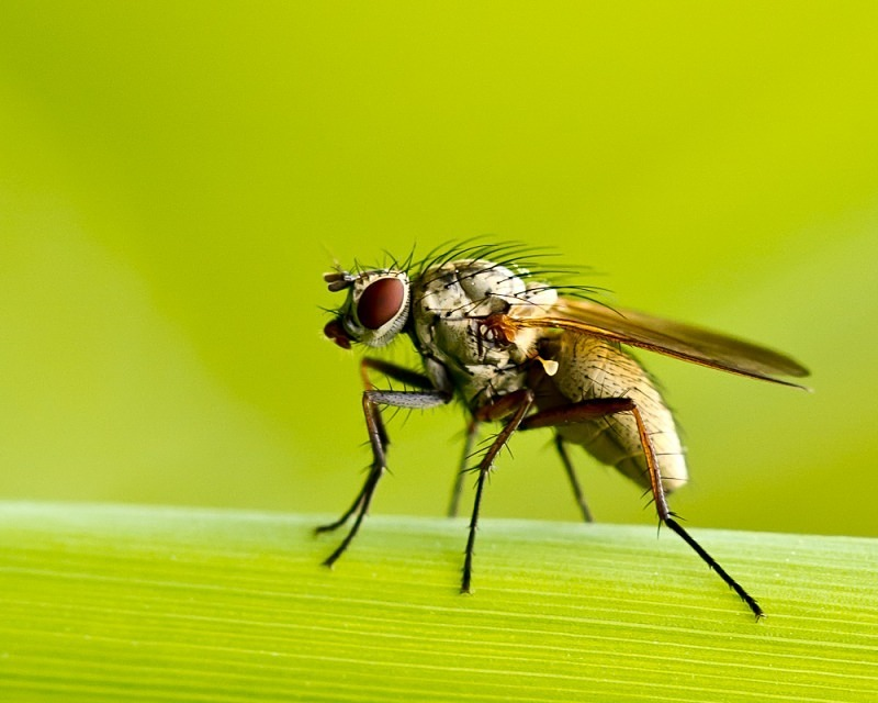 Unknown Fly - Macro Photography