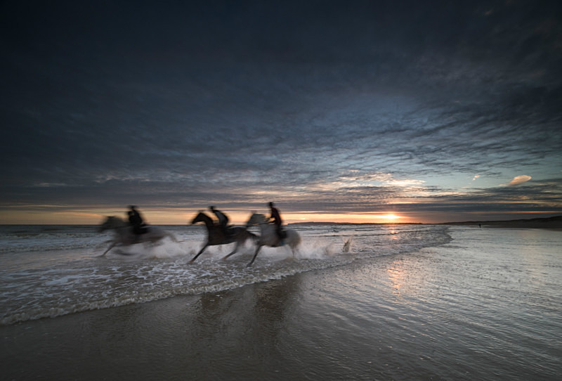 Horses. Camber Sands. Sussex