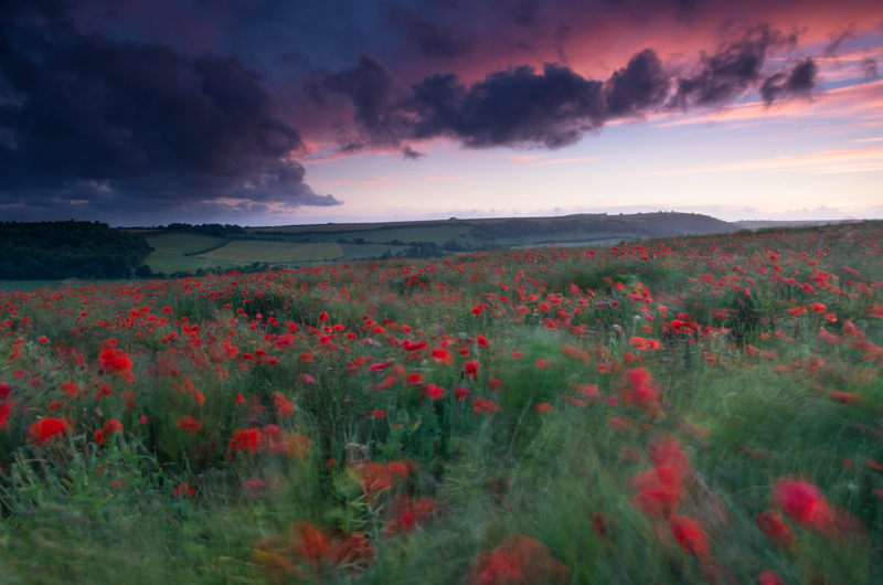 Poppy fields, West Sussex