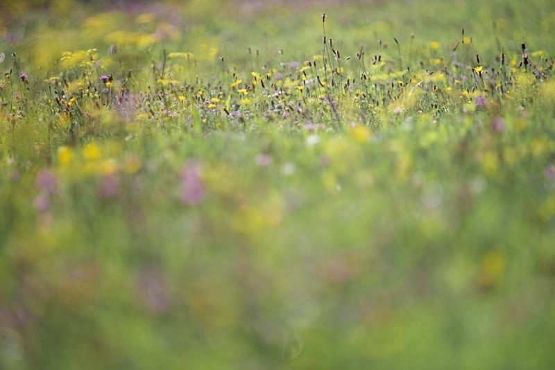 Palette - Growing Wild