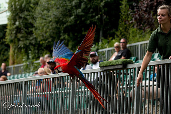 Parrot (© Pearl Winch) - Colchester Zoo - Customer Images