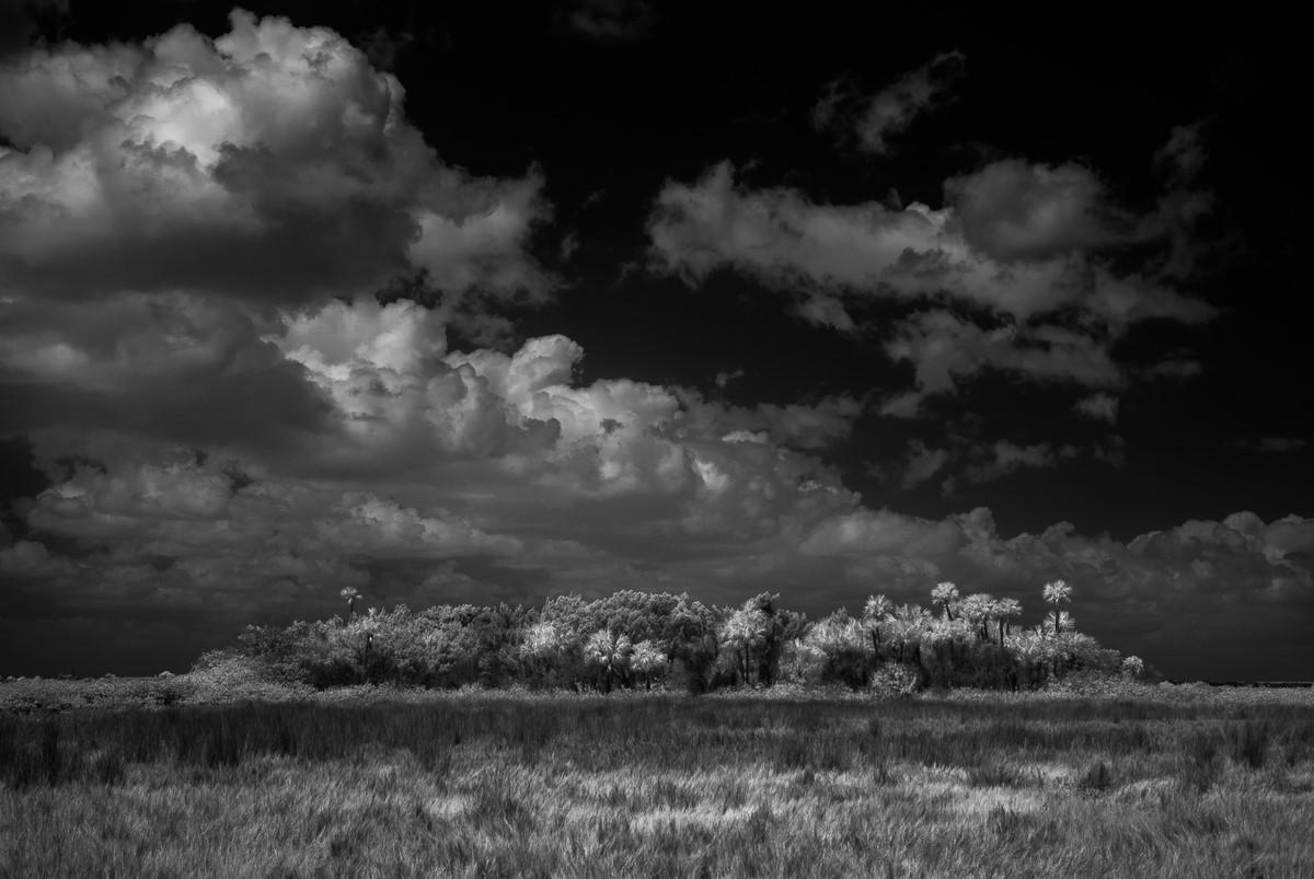 Distant Hammock - Fine Art Black and White - Florida
