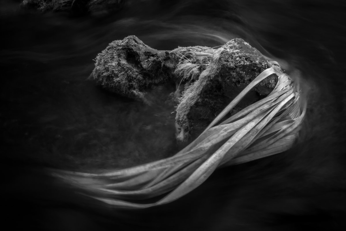 Palm Frond - Fine Art Black and White - Florida