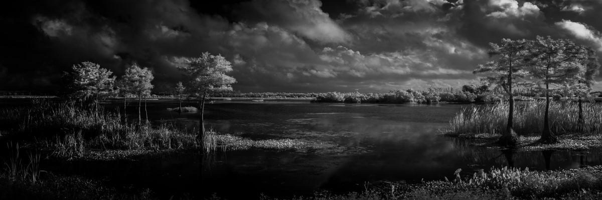 Cypress II - Fine Art Black & White Panoramic 3:1 Ratio