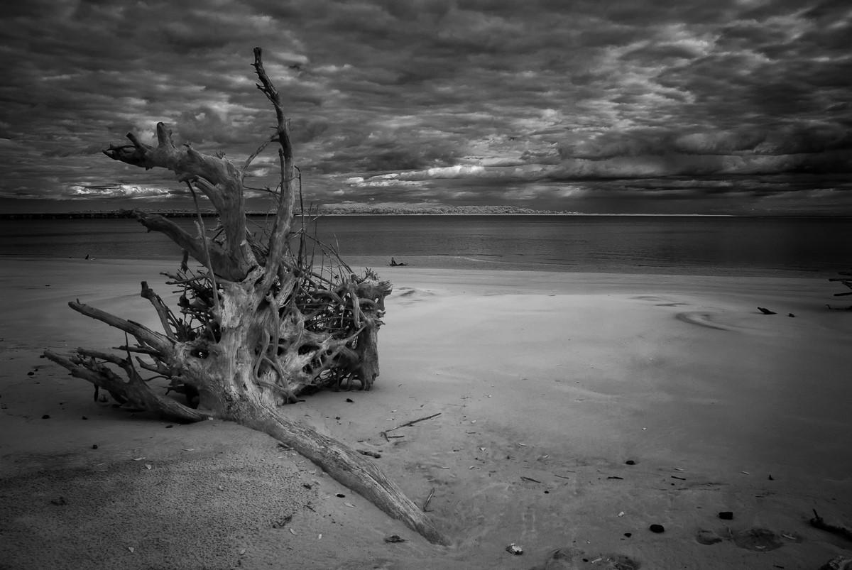 Gathering Storm - Fine Art Black and White - Florida