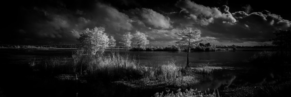 Cypress III - Fine Art Black & White Panoramic 3:1 Ratio