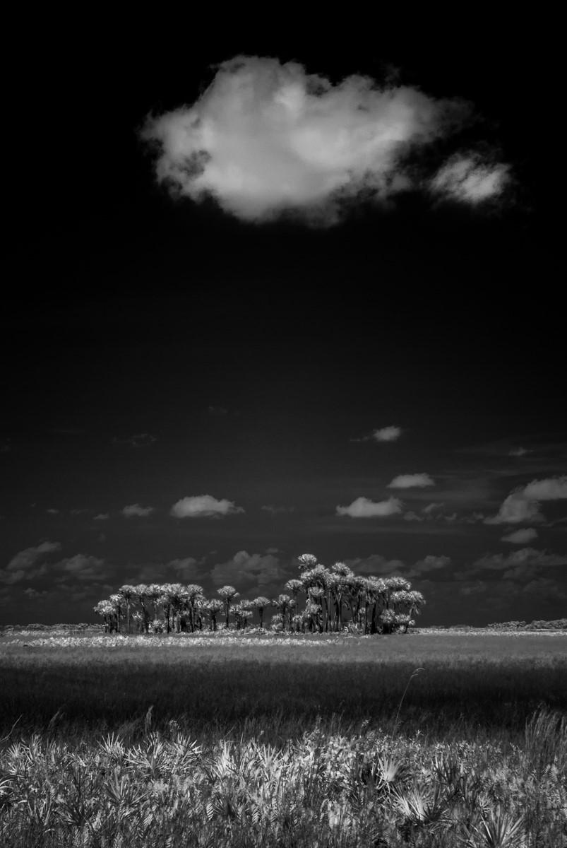 Prophet - Fine Art Black and White - Florida
