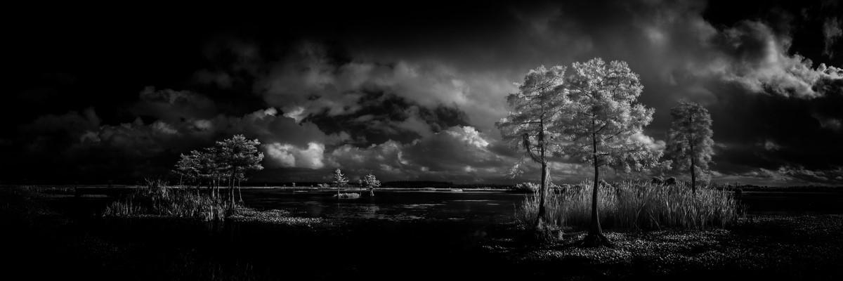 Cypress - Fine Art Black & White Panoramic 3:1 Ratio