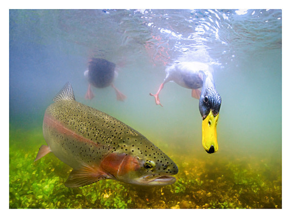 river underwater photography by Paul Colley