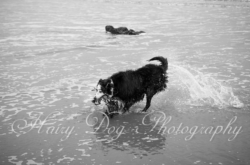dog-photography-seaham-45 - Tess the Collie
