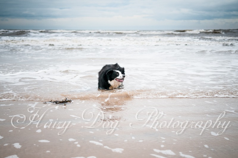 dog-photography-seaham-44 - Tess the Collie