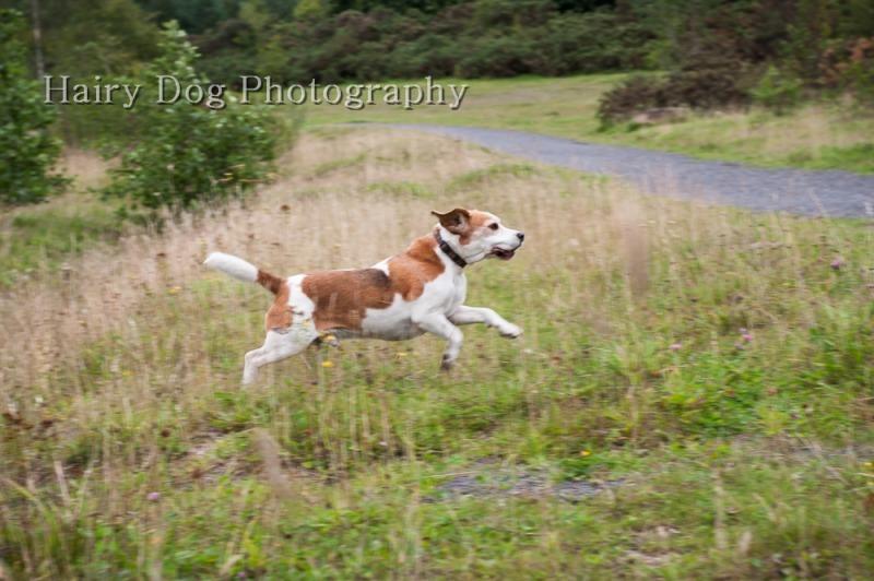 barney-buddy-6 - Barney and Buddy, the Bouncy Beagles!
