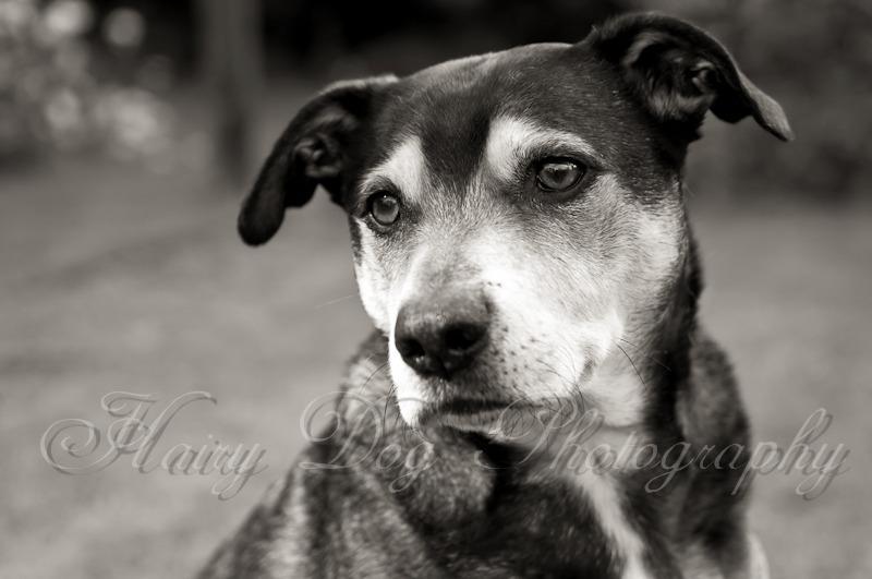 bruno-portraits-7 - Bruno