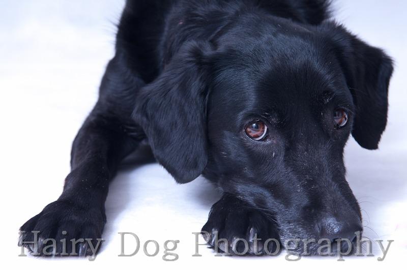 HD-82 - Amy's Dogs, Tynemouth Beach