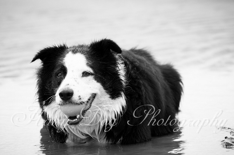dog-photography-seaham-60 - Tess the Collie