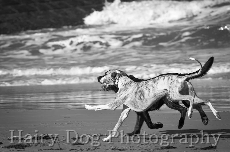 HD-51 - Amy's Dogs, Tynemouth Beach