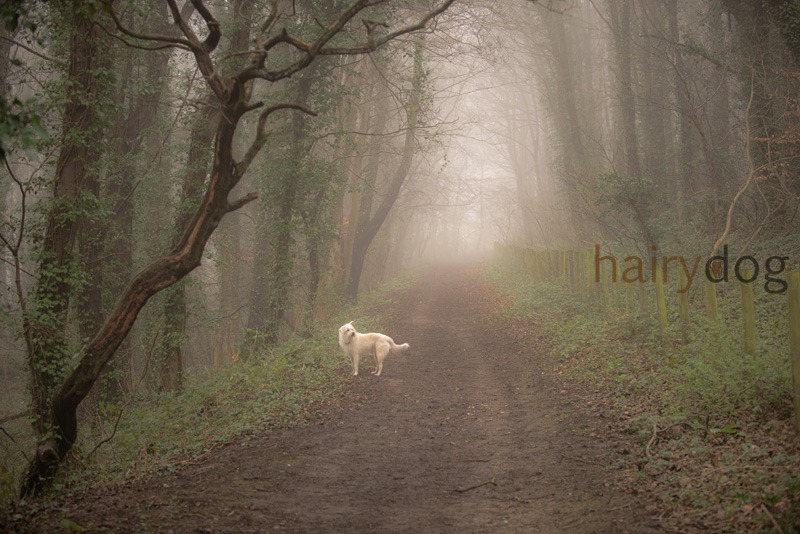 sunderland pet photographer hairy dog - Kasper's Walkies!