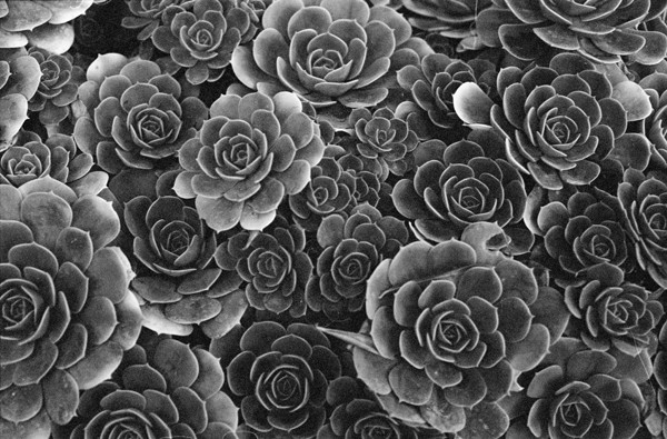 Succulents (Botanical Garden) - Selected Images