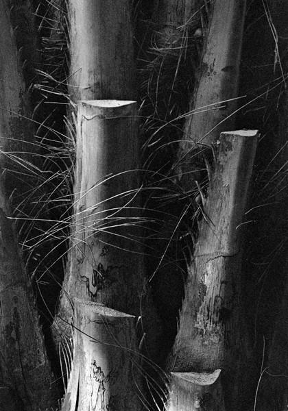 Bamboo (Rio de Janiero) - Selected Images