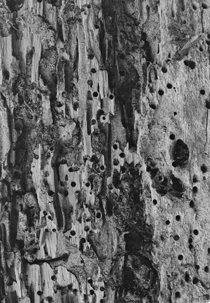 Termites (Rio de Janeiro) #1 - Selected Images